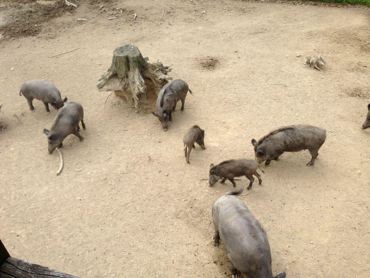 hochwildschutzpark09
