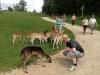 hochwildschutzpark07